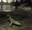 The Devonian terrestrial choanates Acanthostega and Ichthyostega