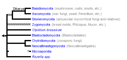 taxon links