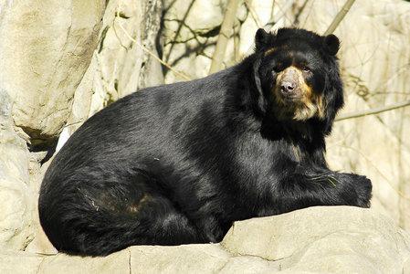 Сенсация - самого большого медведя нашли на полке хранилища!