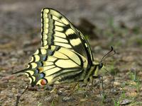 távolítsa el a Lyubertsy papillómát