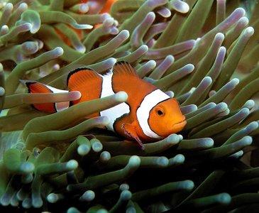 Clownfish Adventures