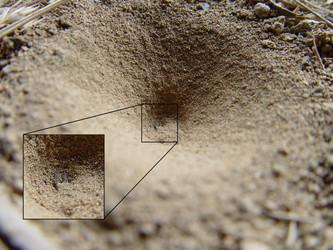borax-for-ants