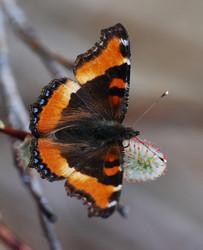 Arthropoda Tree Of Life - LessonPaths