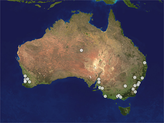 Distribution map of Megalyra shuckardi
