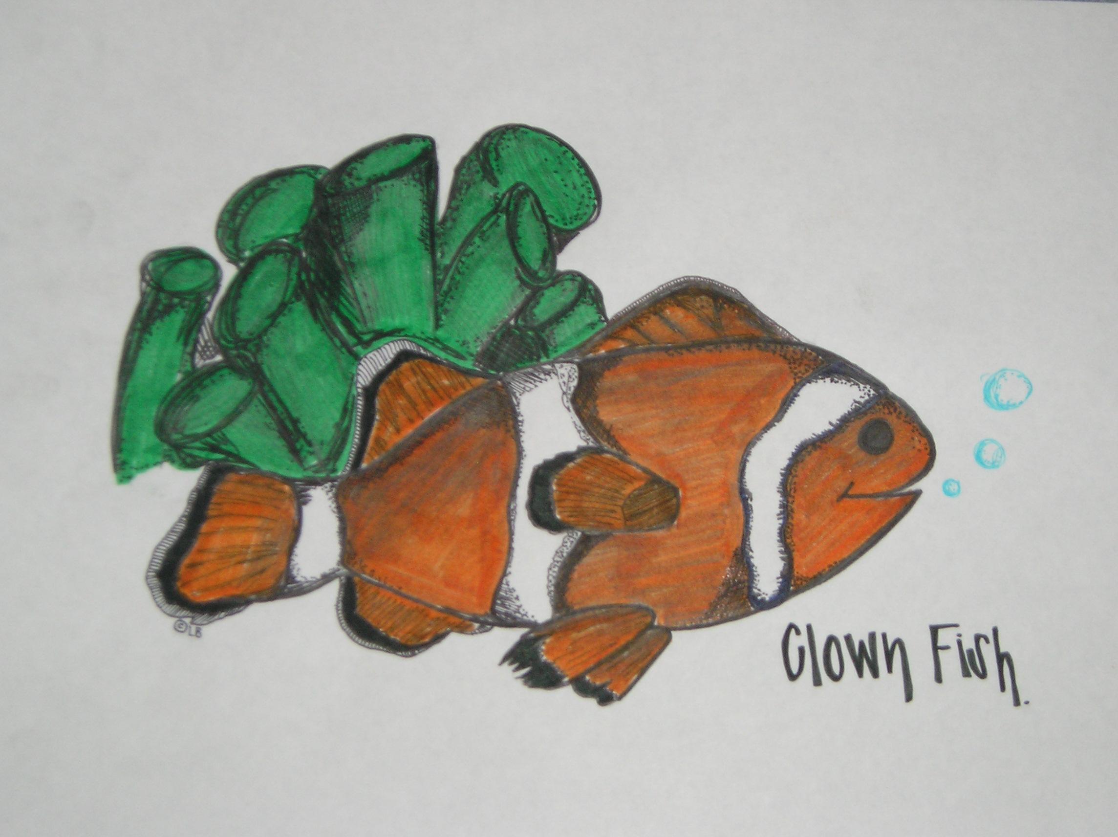 Clownfish Biology