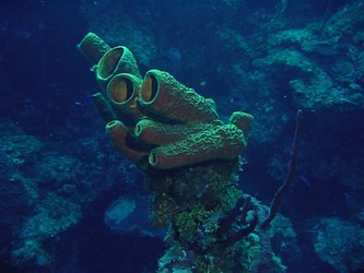 About Sponges
