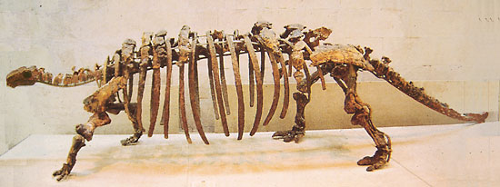 Skeleton of Talarurus