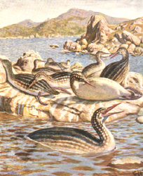 Reconstruction of the fossil Hesperornis