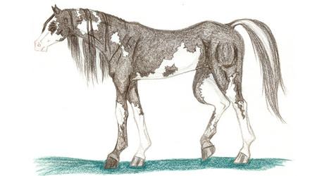 lagomorpha body descriptions