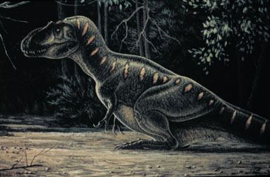 Daspletosaurus torosus at rest