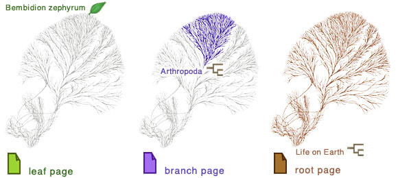 Leaf pages represent tips of the tree of life, branch pages represent groups containing several related subgroups