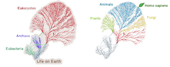 Tree Of Life Structure
